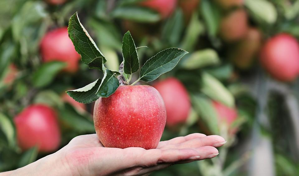 De groene smoothie met sla en appel